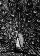 Merzbow, Merzphysics [Import, Limited Edition, Box Set] (CD)