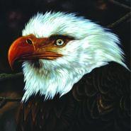 Mogwai, The Hawk Is Howling (LP)