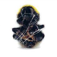 Deadbeat, Walls & Dimensions (CD)