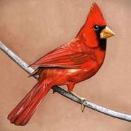 Alexisonfire, Old Crows / Young Cardinals (CD)