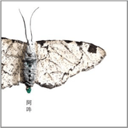Christian Fennesz, AUN: The Beginning & The End Of All Things (CD)