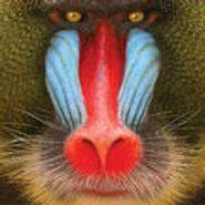 Suckers, Wild Smile (CD)