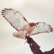 Jm Airis, Wild Birds (LP)