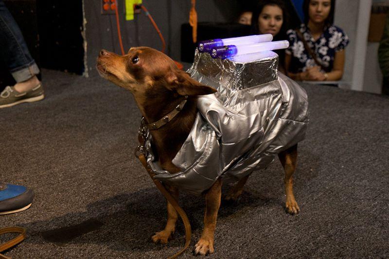Pet Costume contest at Amoeba Hollywood